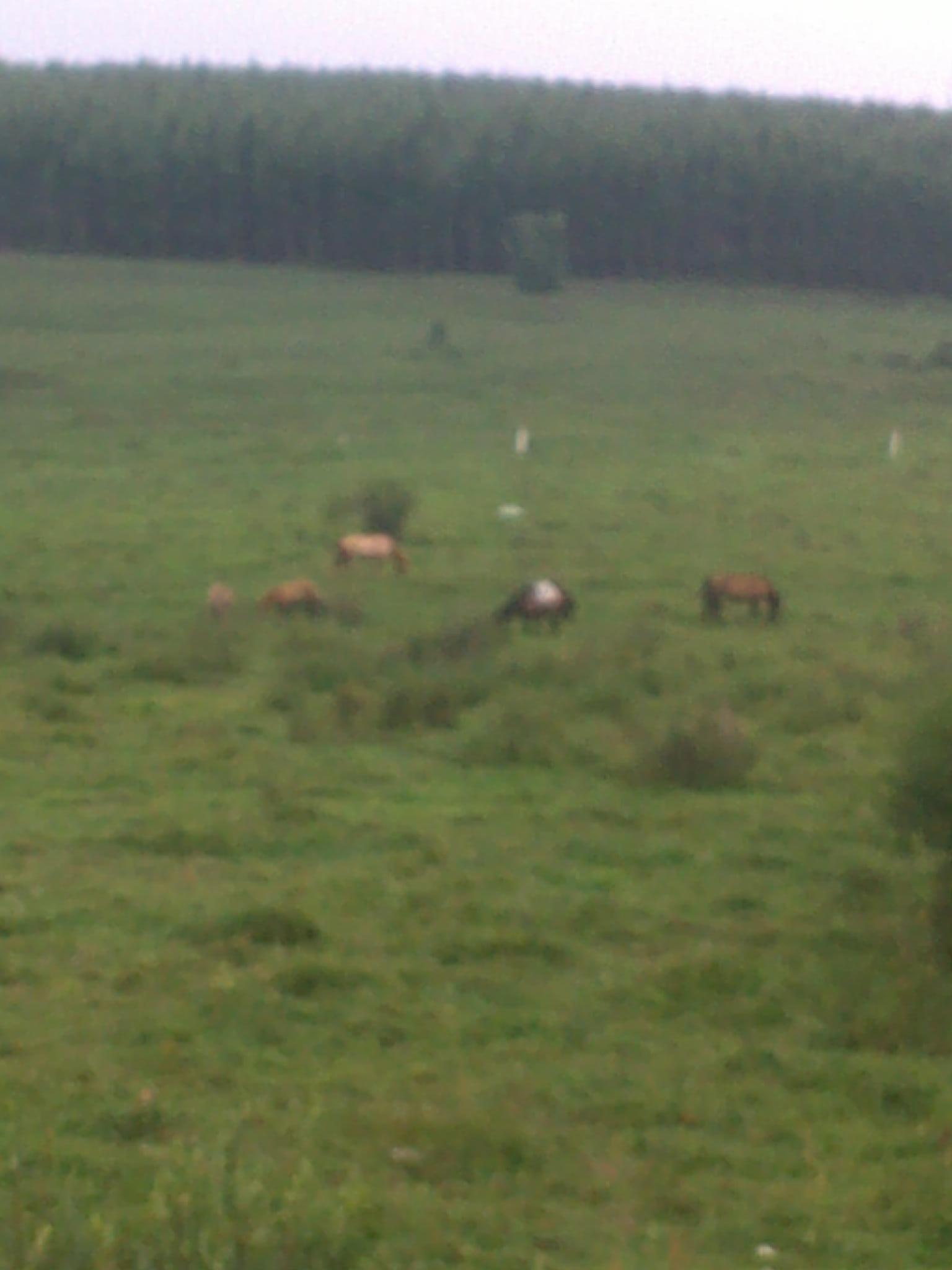 走漭漭草原,体验游牧生活 高清图片