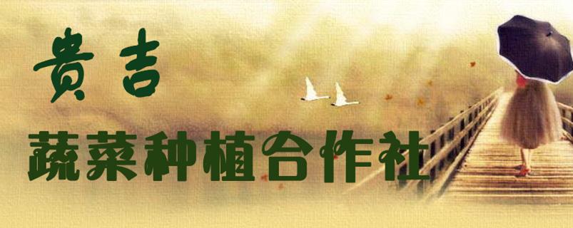 山东省贵吉蔬菜种植合作社
