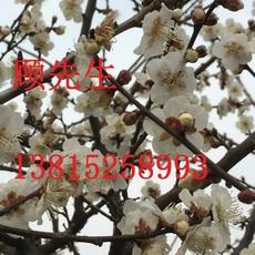 苏州庭院绿化工程苏州景观绿化施工苏州造型树基地园林绿化设计施工苏州苗木