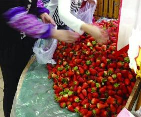 3月头茬草莓正当红草莓供应批发