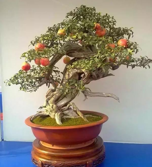 石榴优质种植技术周年管理详解!