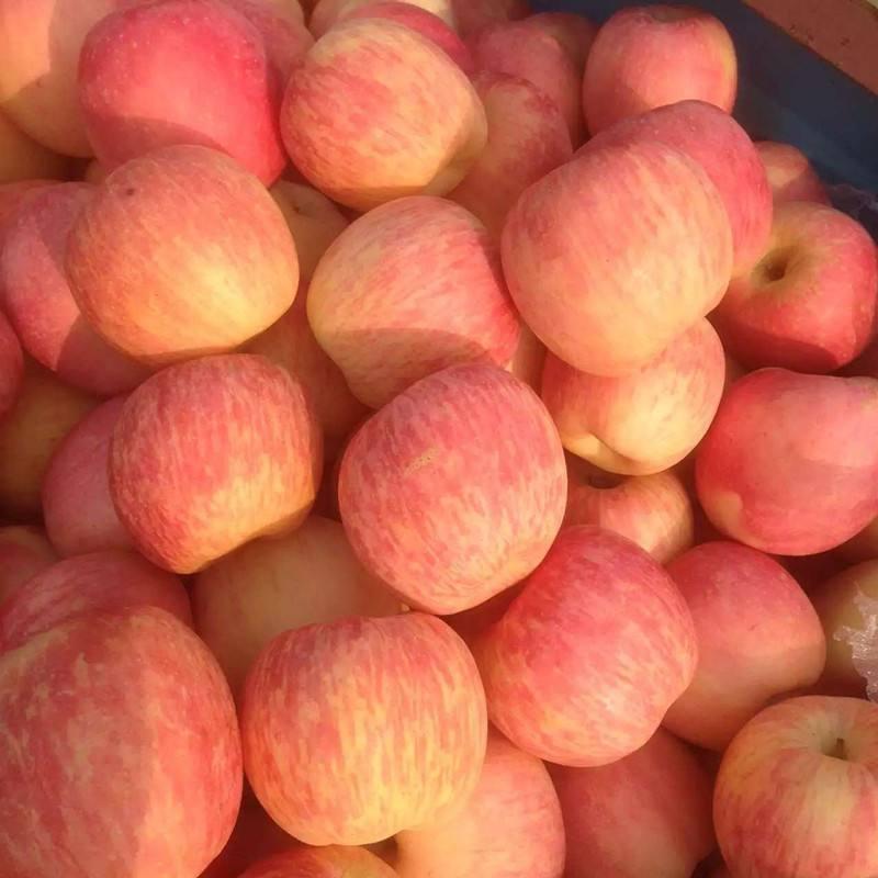 供应红富士水果 延安苹果