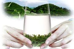 2015新茶上市 明前特级春茶碧螺春苏州洞庭山碧螺春茶叶绿茶500g