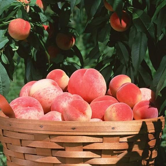 陕西桃子水蜜桃新鲜水果孕妇水果