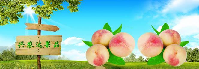 平谷大桃市场