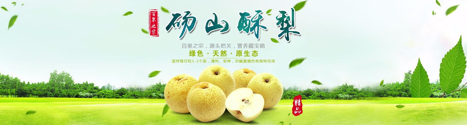 中国梨产业网重点推荐优质砀山酥梨