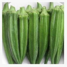 绿美人黄秋葵种子10克 基地专供 有机蔬菜种子公司
