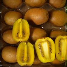 四川·邛崃猕猴桃有机奇异果黄金果黄心5斤 30粒 全国包邮产地直销疯抢