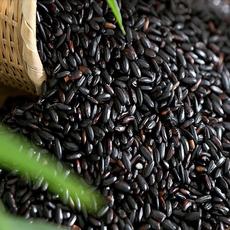 萍乡市时珍种养 厂家直销 供应补血佳品--黑米