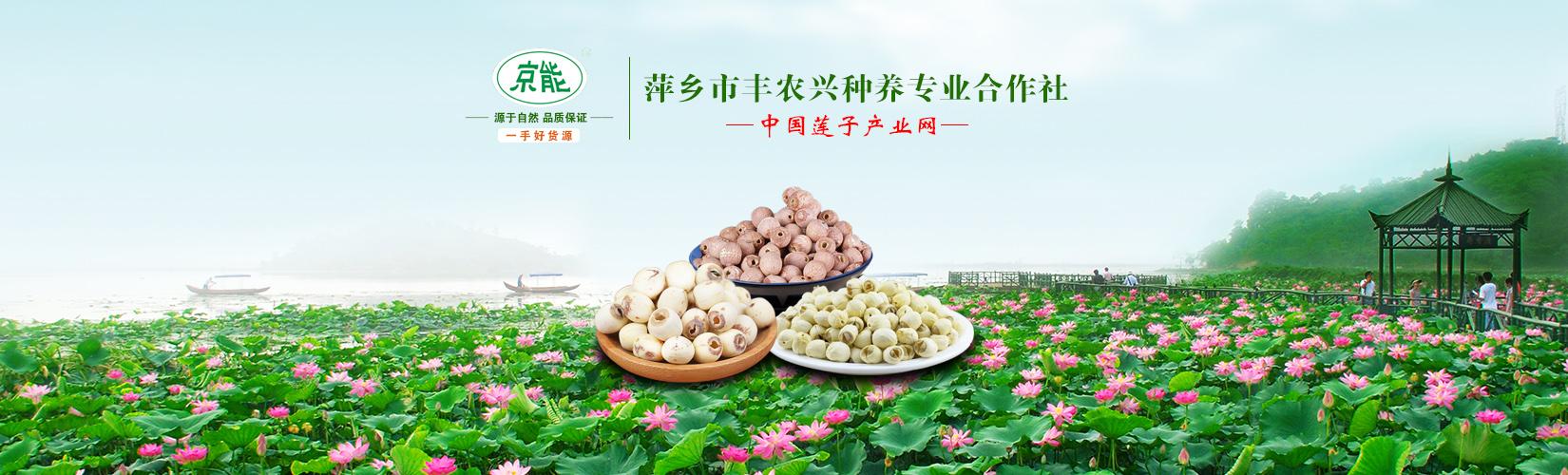 中国莲子产业网金牌