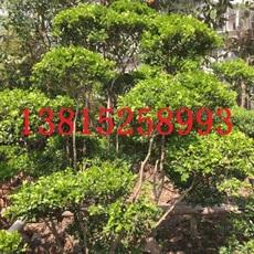 苏州庭院绿化工程 别墅花园绿化工程 苏州私家花园设计 庭院花园绿化施工