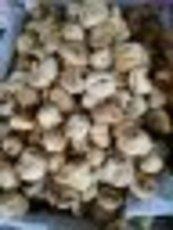 吐鲁番雪阁干果加工中心 土耳其无花果批发供应 高营养价值 热销