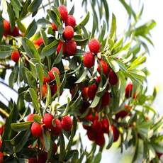 特供新鲜杨梅 无农药家肥种植