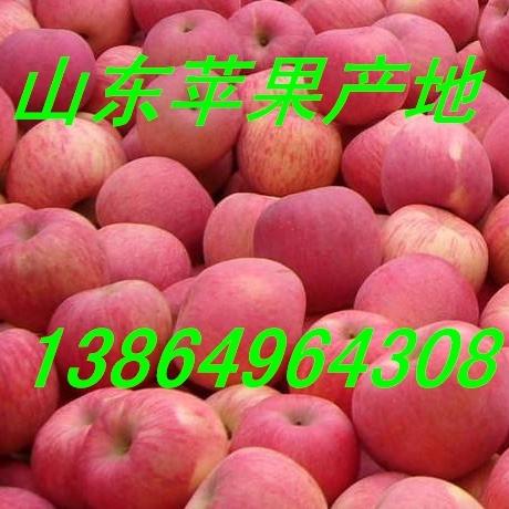 山东红星苹果种植基地