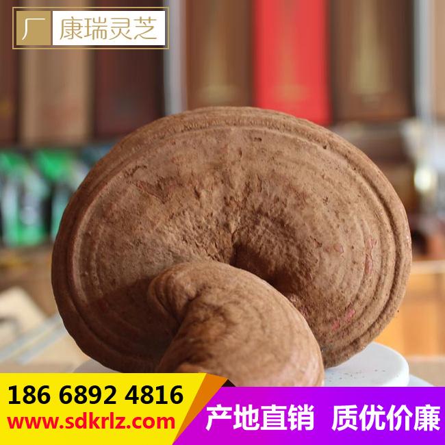 灵芝盆景分类 河南衡阳灵芝盆景材料选取