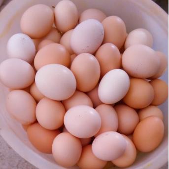 巢湖仙人洞祥泰畜牧合作社土鸡蛋