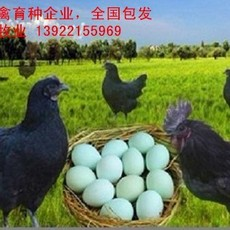 绿壳鸡苗厂家批发,全国包发绿壳鸡苗价格实惠