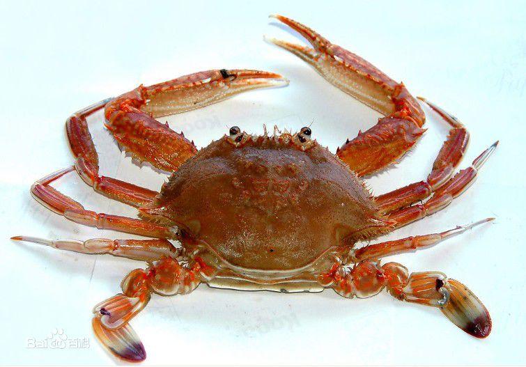 现货大闸蟹公母蟹  3.5两母4两公 鲜活巢湖螃蟹