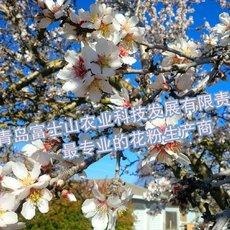 李子花粉 富士山牌人工授粉用活性花粉-李子花粉 提高果树产量与质量
