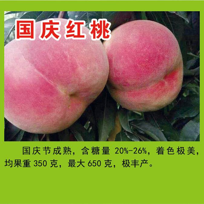 王氏明丰蜜桃园供应国庆红桃等多个品种   糖度高 品质优  耐储存