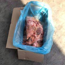 供应 进口猪头 冷冻猪头比利时171-1猪头 货源充足 最新日期