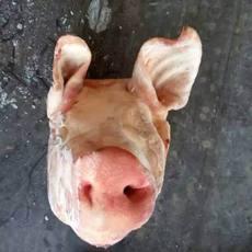 供应 进口猪头 冷冻猪头 法国50453003猪头 一手货源 正关产品