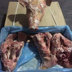 供应 进口猪头 冷冻猪头 法国35125002猪头 一手货源 正关产品