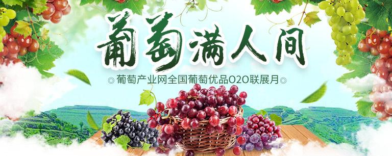 葡萄产业网 全国最好的葡萄