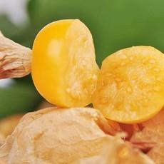 义和菇茑种植 小菇茑 东北菇茑 新鲜水果 小菇茑批发