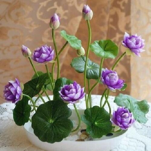 四季種植水生碗蓮含花盆水培植物小睡蓮根莖迷你花卉荷花盆栽套餐