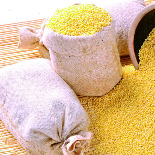 振兴黄小米供应 散小米供应