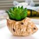 供应创意海螺小盆栽