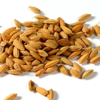 纯天然有机食品小麦种子 芽苗菜种子 猫草小麦草种子 营养丰富
