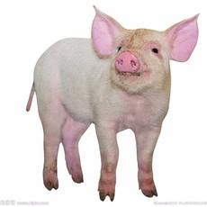 养殖社供应生猪来电议价