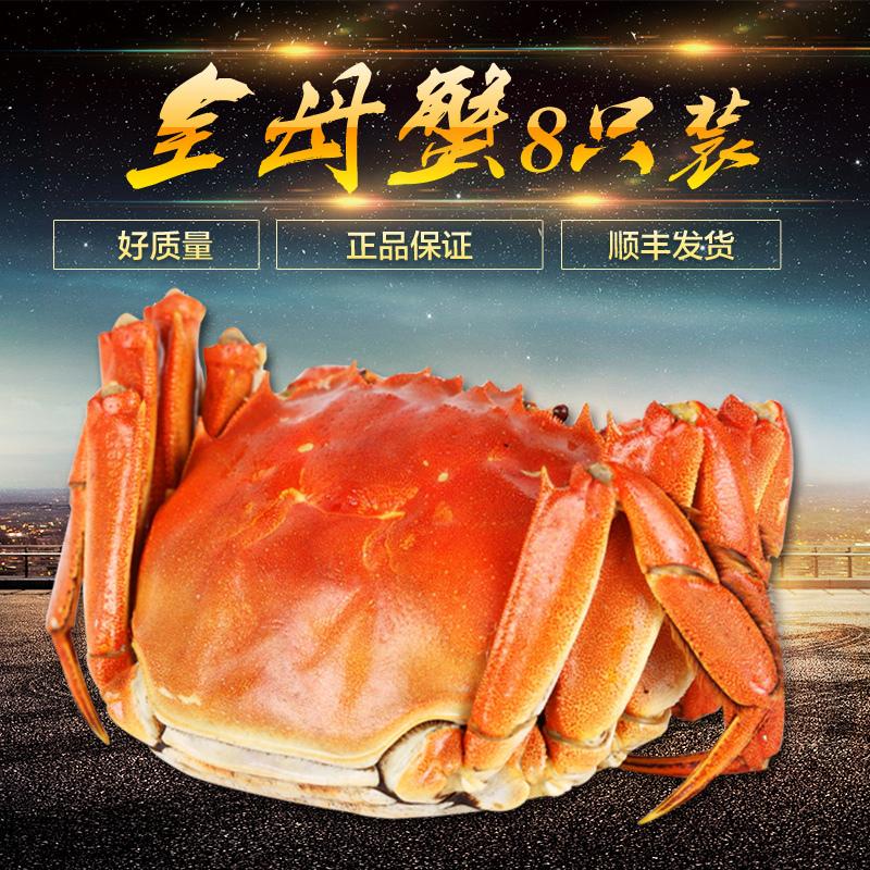现货正宗阳澄湖大闸蟹全母蟹 鲜活螃蟹(可5公5母可全10只母)