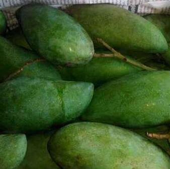 供应 新品水果泰国青皮芒生吃芒果