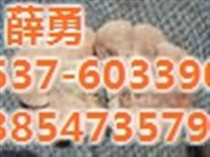 榆耳食用营养|永腾榆耳(图)|榆耳基地出售
