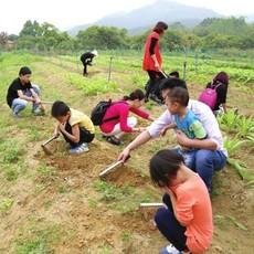 亲子农场   有机蔬菜  回味童年的味道  体验农家的欢乐