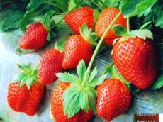 丹东九九草莓大量供应