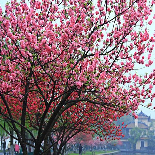花卉苗木基地专供价格–中国网库
