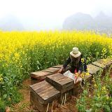 蜂王浆的作用与功效有哪些
