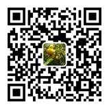 中国刺梨产业网