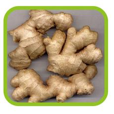 常年供应 山东生姜 水洗风干烘干保鲜姜 出口级生姜姜种 绿色食品