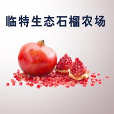 【正宗临潼石榴】 甜 晶莹红润  籽多饱满  1斤左右9个装99包邮 临特石榴生态园