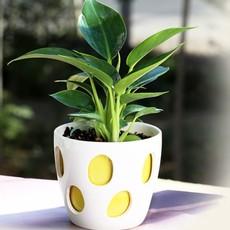 恭喜武汉云陆园艺品牌获得武汉绿植盆栽类知名品牌