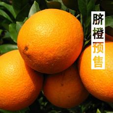 预售江西赣南脐橙 热销美容保健水果 果园直销