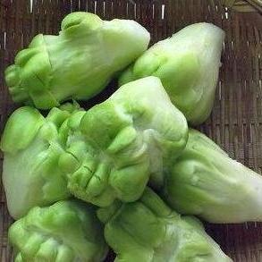 青菜头批发  厂家直销  涪陵庹亮蔬菜种植园专供