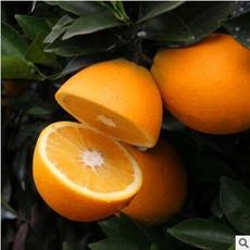 赣南脐橙 橙子新鲜水果 超甜多汁农家果园直供现摘现发5斤