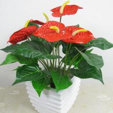 批发红掌 四季开花 办公室内盆栽观花植物 桌面植物安祖花
