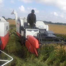 黑龙江大米-收割水稻